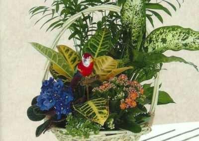 cesta de plantas en trebole floristeria en pola de laviana asturias