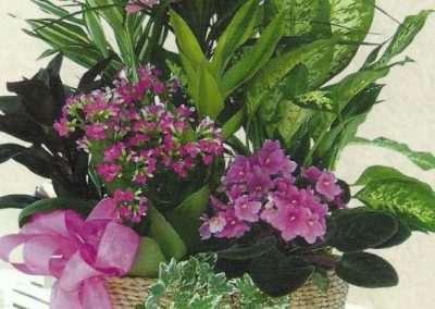 cesta de plantas variadas,en floristeria trebole,en pola de laviana, asturias