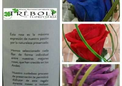 Rosa preservada o eterna