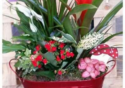 composiciones con plantas naturales ,en floristeria trebole ,en pola de laviana en la cuenca del nalon en asturias