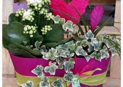 composiciones con plantas naturales en floristeria trebole,en pola de laviana en la cuenca del nalon en asturias