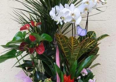 cestas de plantas naturales para regalar en floristeria trebole en pola de laviana en la cuenca del nalon en asturias
