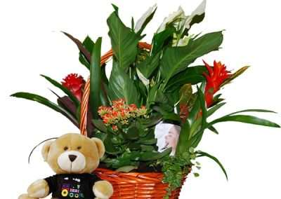 cestas de plantas para regalo en floristeria trebole en pola de laviana en la cuenca del nalon en asturias