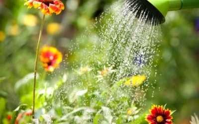 Frecuencia de riego, cada cuento tiempo se riegan las plantas.